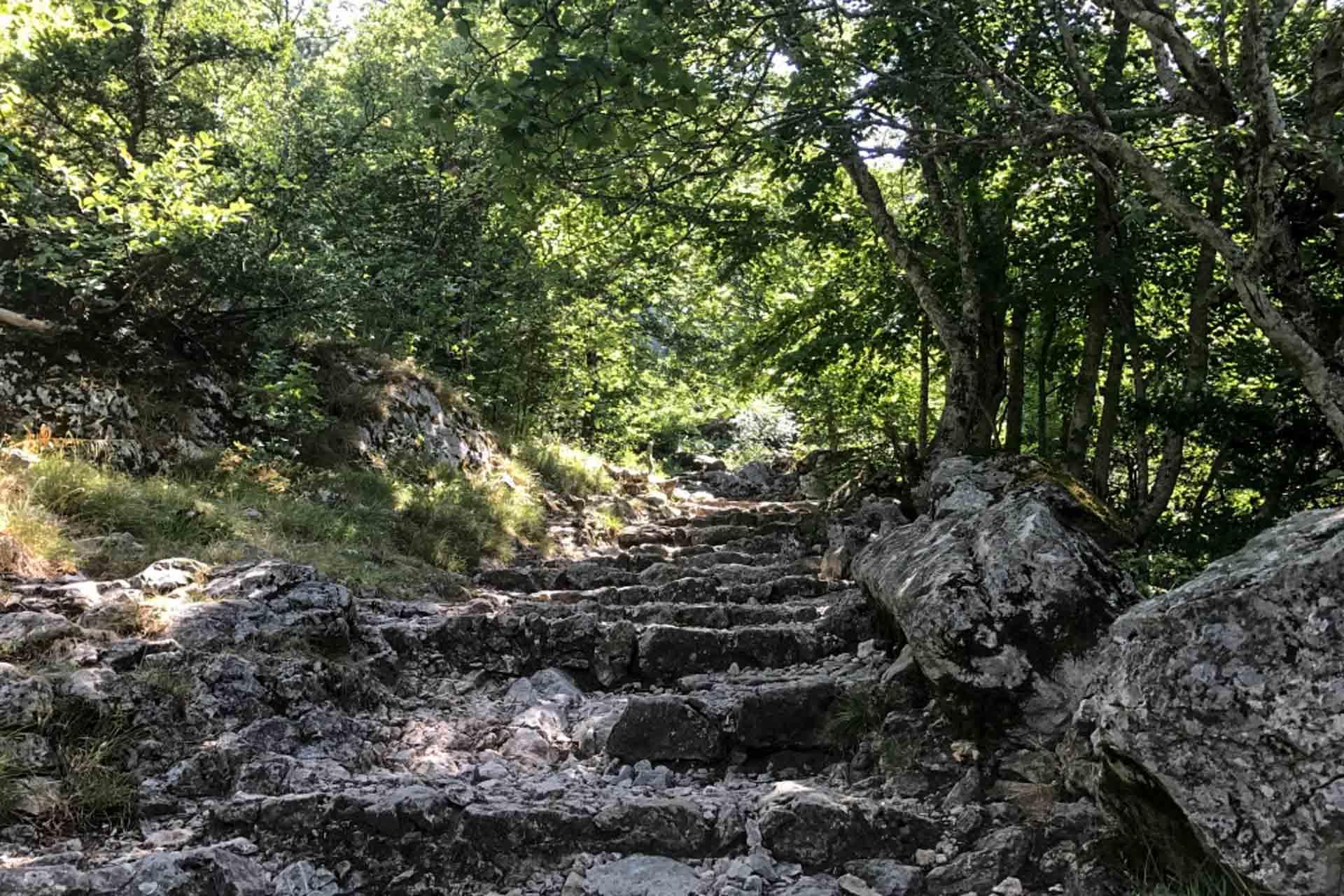 Mont Saint-Pilon's forest